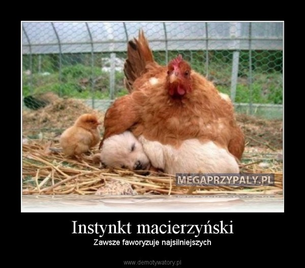Instynkt macierzyński – Zawsze faworyzuje najsilniejszych