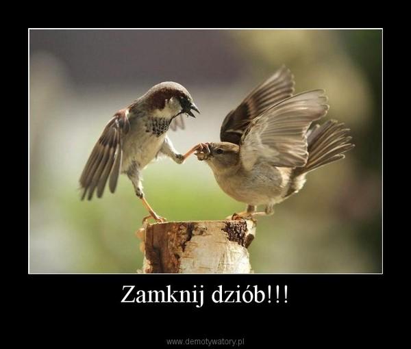 Zamknij dziób!!! –