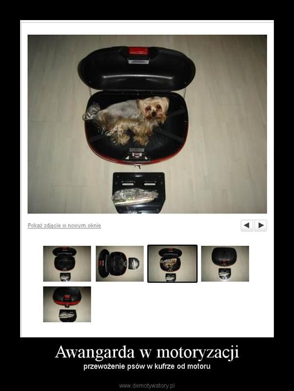 Awangarda w motoryzacji – przewożenie psów w kufrze od motoru