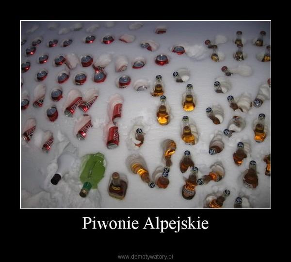 Piwonie Alpejskie –