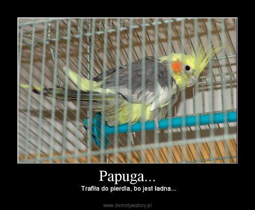 Papuga...