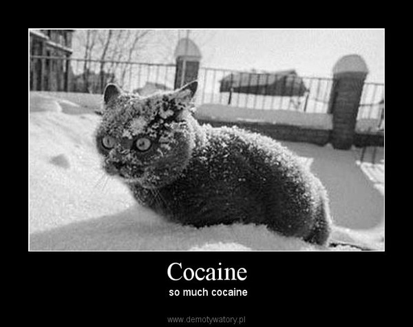 Cocaine – so much cocaine