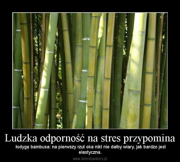 Ludzka odporność na stres przypomina – łodygę bambusa: na pierwszy rzut oka nikt nie dałby wiary, jak bardzo jestelastyczna.