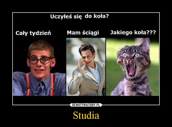 Studia –