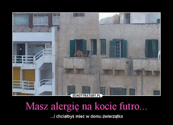 Masz alergię na kocie futro... – ...i chciałbyś mieć w domu zwierzątko
