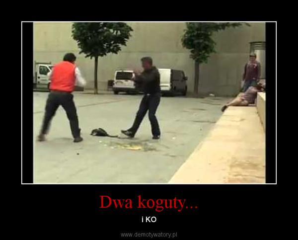 Dwa koguty... – i KO