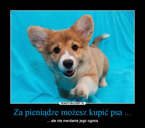 Za pieniądze możesz kupić psa ...