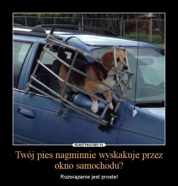 Twój pies nagminnie wyskakuje przez okno samochodu? – Rozwiązanie jest proste!