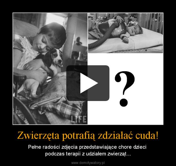 Zwierzęta potrafią zdziałać cuda! – Pełne radości zdjęcia przedstawiające chore dzieci podczas terapii z udziałem zwierząt...