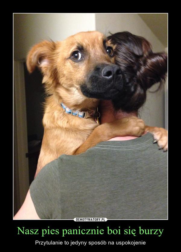 Nasz pies panicznie boi się burzy – Przytulanie to jedyny sposób na uspokojenie