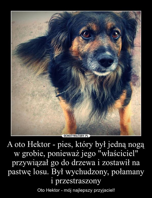 """A oto Hektor - pies, który był jedną nogą w grobie, ponieważ jego """"właściciel"""" przywiązał go do drzewa i zostawił na pastwę losu. Był wychudzony, połamany i przestraszony – Oto Hektor - mój najlepszy przyjaciel!"""