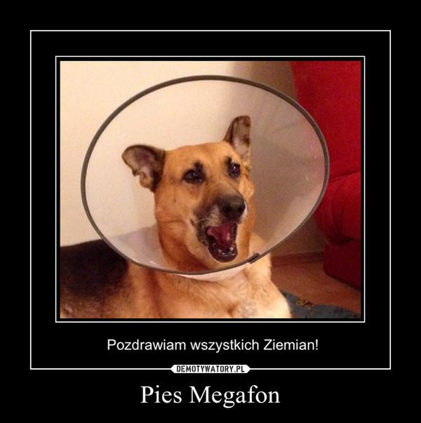 Pies Megafon –