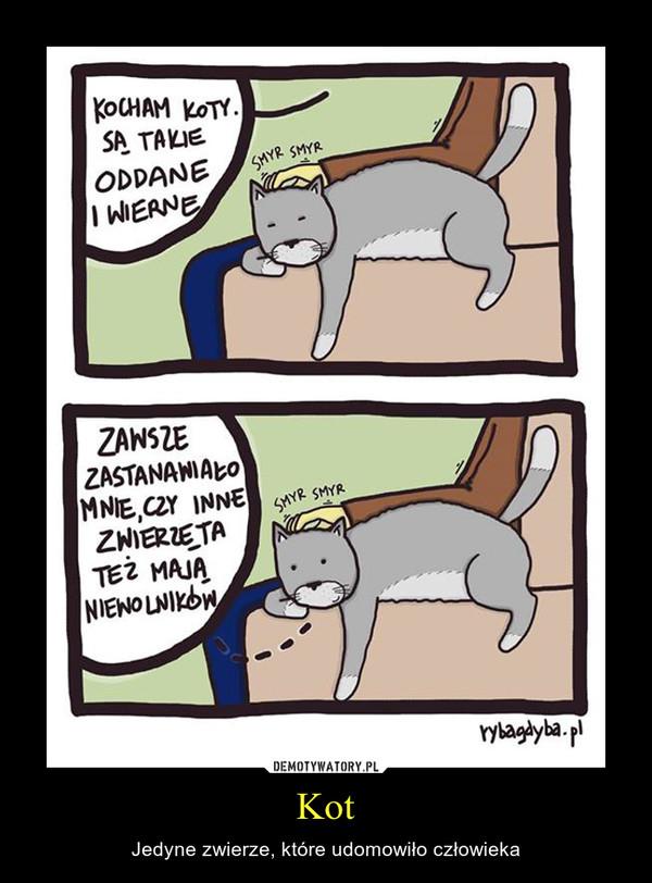 Kot – Jedyne zwierze, które udomowiło człowieka