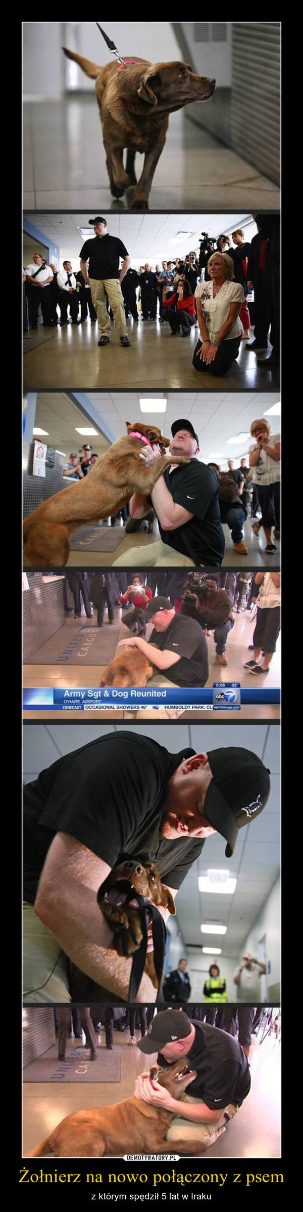 Żołnierz na nowo połączony z psem – z którym spędził 5 lat w Iraku