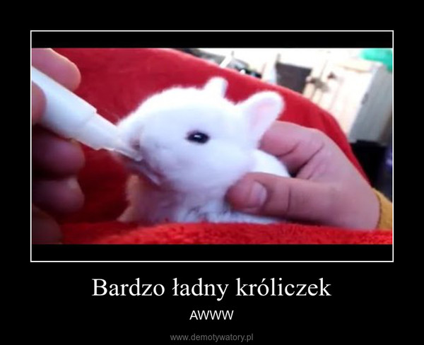 Bardzo ładny króliczek – AWWW