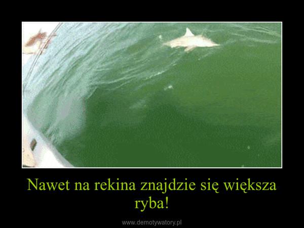 Nawet na rekina znajdzie się większa ryba! –