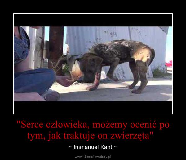 """""""Serce człowieka, możemy ocenić po tym, jak traktuje on zwierzęta""""   – ~ Immanuel Kant ~"""