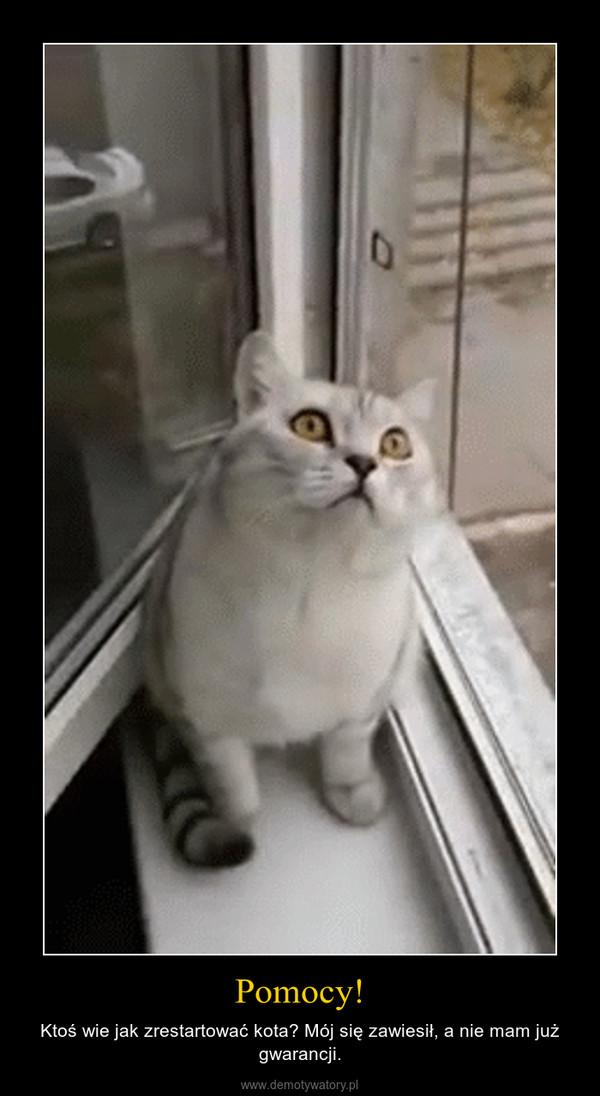 Pomocy! – Ktoś wie jak zrestartować kota? Mój się zawiesił, a nie mam już gwarancji.