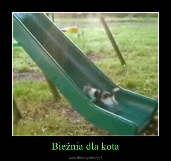 Bieżnia dla kota –