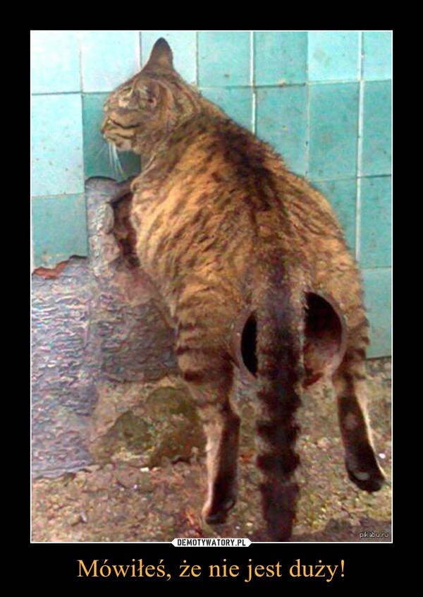 Mówiłeś, że nie jest duży! –