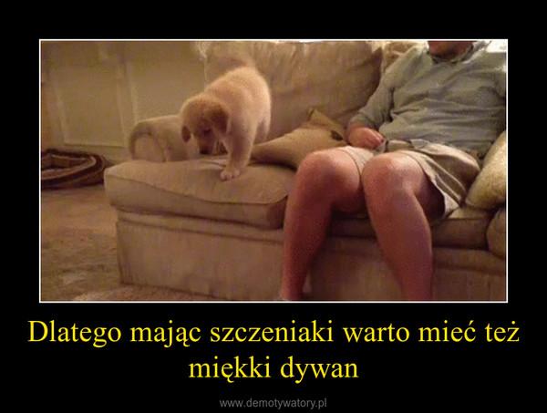 Dlatego mając szczeniaki warto mieć też miękki dywan –