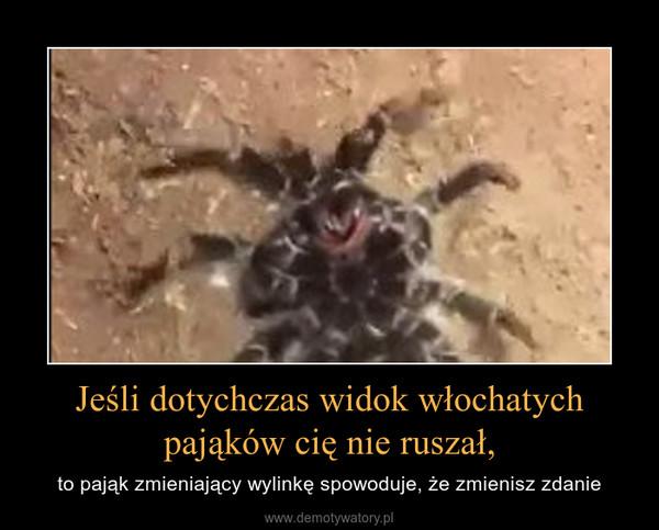 Jeśli dotychczas widok włochatych pająków cię nie ruszał, – to pająk zmieniający wylinkę spowoduje, że zmienisz zdanie