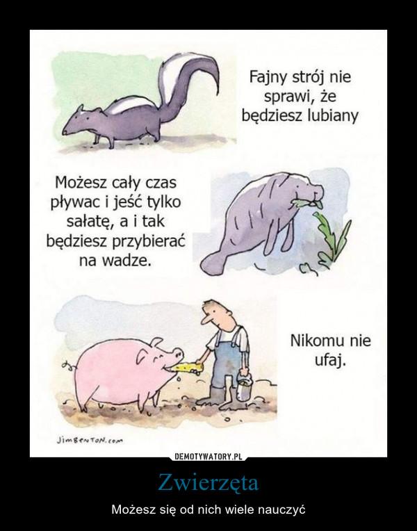 Zwierzęta – Możesz się od nich wiele nauczyć Możesz cały czas pływać i jeść tylko sałatę, a i tak będziesz przybierać na wadze. Fajny strój nie sprawi, że będziesz lubiany Nikomu nie ufaj.