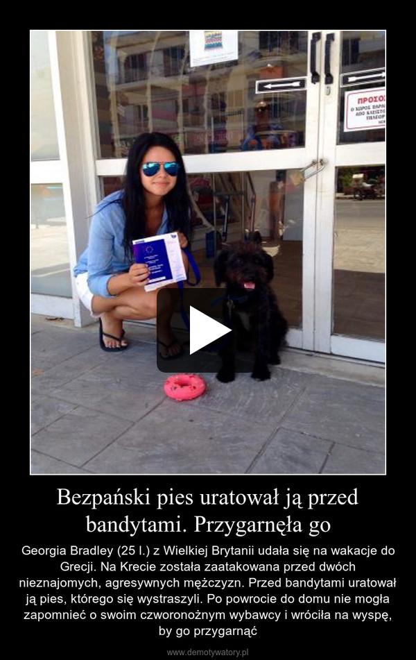 Bezpański pies uratował ją przed bandytami. Przygarnęła go – Georgia Bradley (25 l.) z Wielkiej Brytanii udała się na wakacje do Grecji. Na Krecie została zaatakowana przed dwóch nieznajomych, agresywnych mężczyzn. Przed bandytami uratował ją pies, którego się wystraszyli. Po powrocie do domu nie mogła zapomnieć o swoim czworonożnym wybawcy i wróciła na wyspę, by go przygarnąć