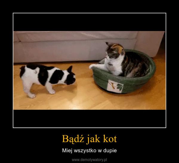 Bądź jak kot – Miej wszystko w dupie