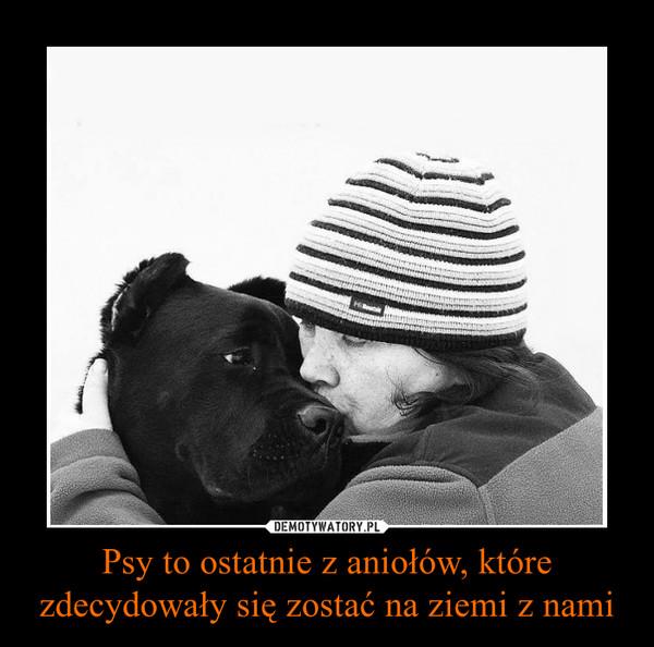 Psy to ostatnie z aniołów, które zdecydowały się zostać na ziemi z nami –