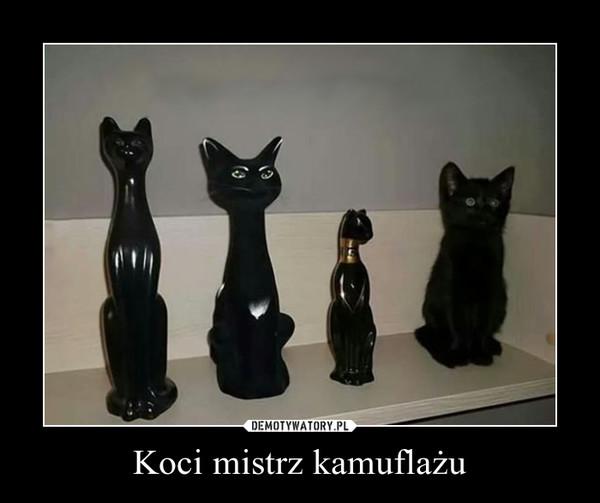 Koci mistrz kamuflażu –