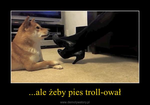 ...ale żeby pies troll-ował –