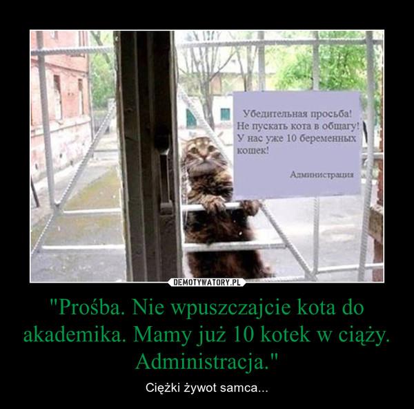 """""""Prośba. Nie wpuszczajcie kota do akademika. Mamy już 10 kotek w ciąży. Administracja."""" – Ciężki żywot samca..."""