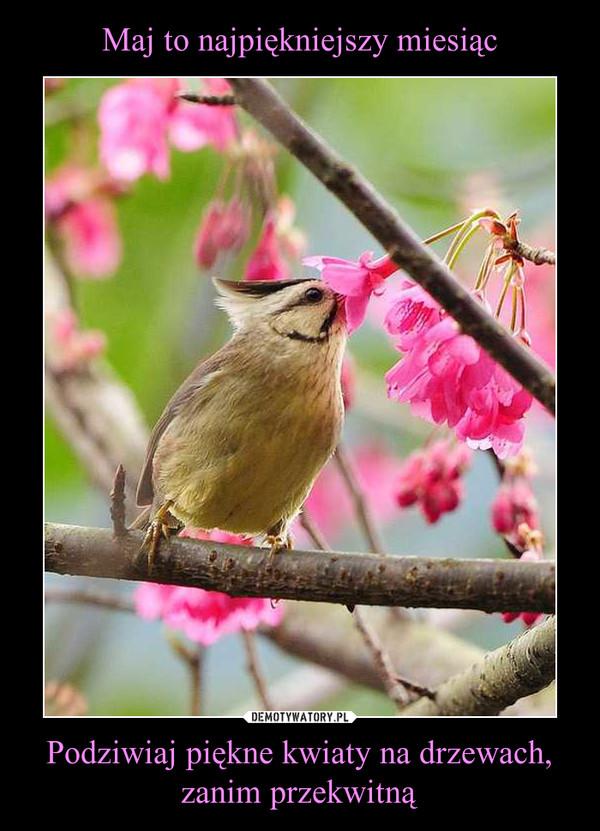 Podziwiaj piękne kwiaty na drzewach, zanim przekwitną –