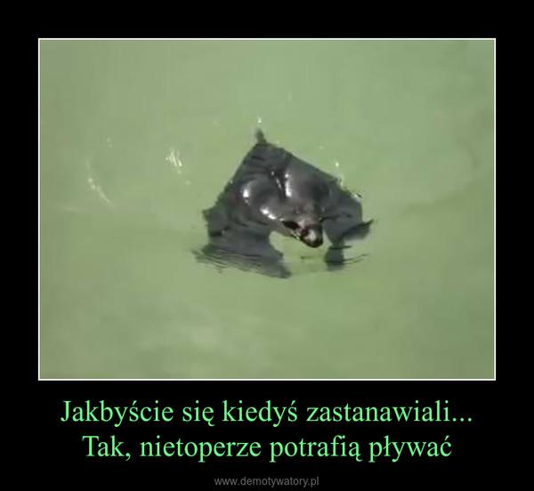 Jakbyście się kiedyś zastanawiali...Tak, nietoperze potrafią pływać –