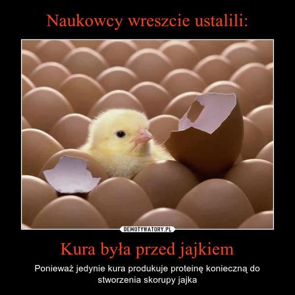 Kura była przed jajkiem – Ponieważ jedynie kura produkuje proteinę konieczną do stworzenia skorupy jajka