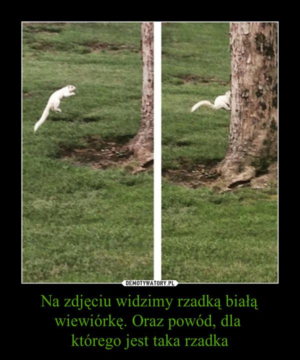 Na zdjęciu widzimy rzadką białą wiewiórkę. Oraz powód, dla którego jest taka rzadka –