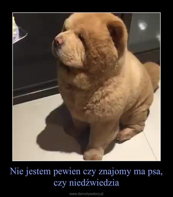 Nie jestem pewien czy znajomy ma psa, czy niedźwiedzia –