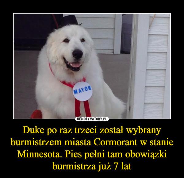 Duke po raz trzeci został wybrany burmistrzem miasta Cormorant w stanie Minnesota. Pies pełni tam obowiązki burmistrza już 7 lat –