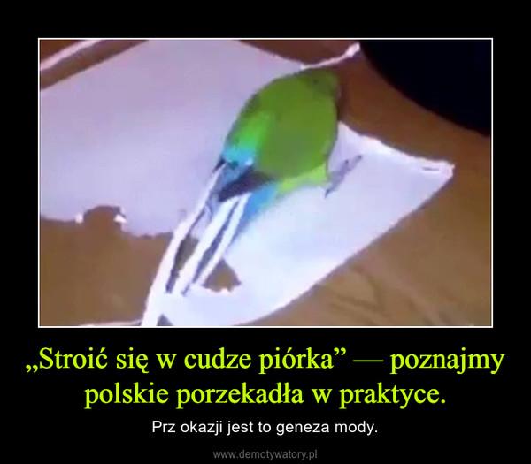 """""""Stroić się w cudze piórka"""" — poznajmy polskie porzekadła w praktyce. – Prz okazji jest to geneza mody."""