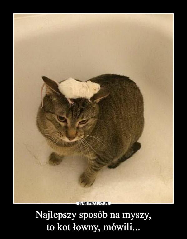 Najlepszy sposób na myszy,to kot łowny, mówili... –