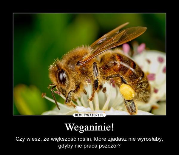 Weganinie! – Czy wiesz, że większość roślin, które zjadasz nie wyrosłaby, gdyby nie praca pszczół?