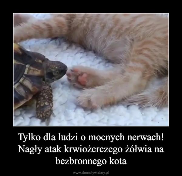 Tylko dla ludzi o mocnych nerwach! Nagły atak krwiożerczego żółwia na bezbronnego kota –