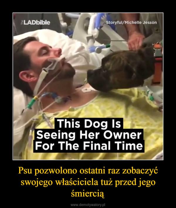 Psu pozwolono ostatni raz zobaczyć swojego właściciela tuż przed jego śmiercią –