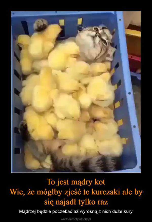 To jest mądry kotWie, że mógłby zjeść te kurczaki ale by się najadł tylko raz – Mądrzej będzie poczekać aż wyrosną z nich duże kury