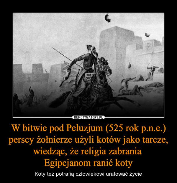 W bitwie pod Peluzjum (525 rok p.n.e.) perscy żołnierze użyli kotów jako tarcze, wiedząc, że religia zabrania Egipcjanom ranić koty – Koty też potrafią człowiekowi uratować życie