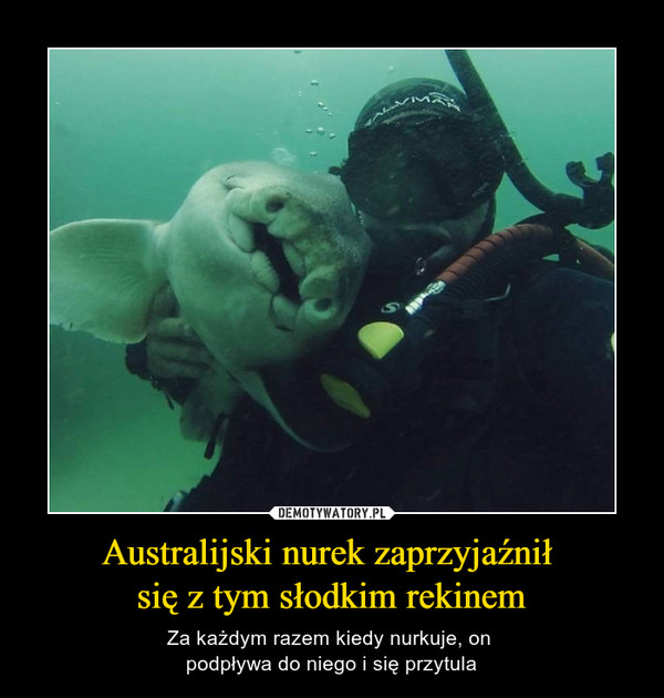 Australijski nurek zaprzyjaźnił się z tym słodkim rekinem – Za każdym razem kiedy nurkuje, on podpływa do niego i się przytula