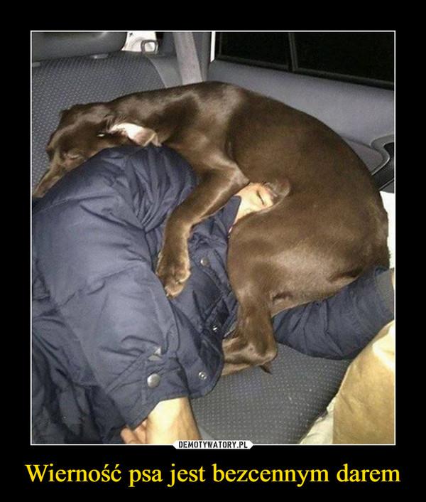 Wierność psa jest bezcennym darem –