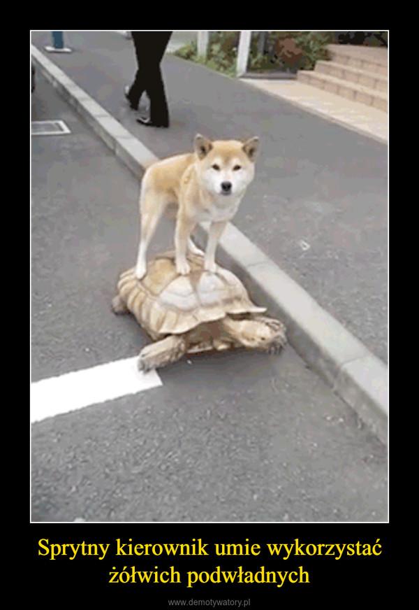 Sprytny kierownik umie wykorzystać żółwich podwładnych –