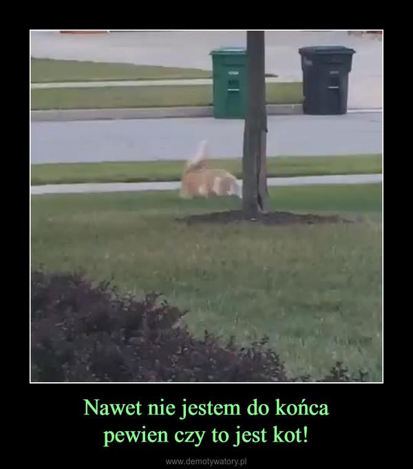 Nawet nie jestem do końcapewien czy to jest kot! –